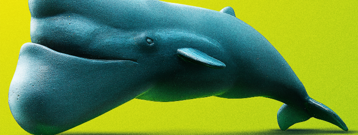 シャクレルプラネット_whale