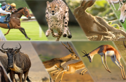 世界最速の陸上動物Top10