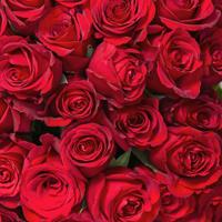 999本のバラの花言葉