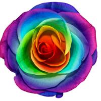 虹色のバラの花言葉