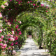 バラの季節や花言葉、関東のバラの名所7選など、バラに関する情報満載!!