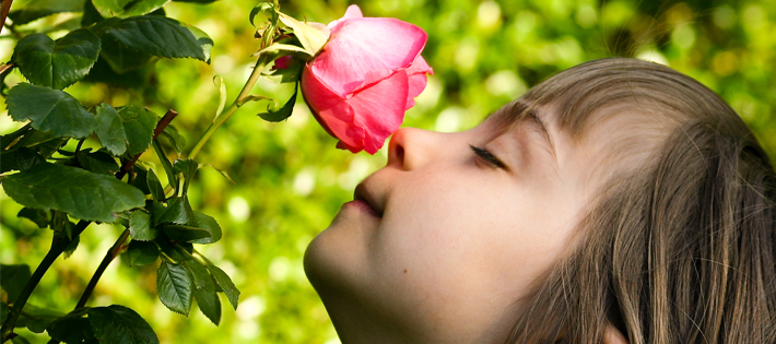 バラの香りがもたらす6つの効果