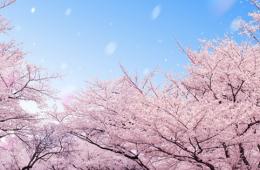 横浜の桜の名所でデート