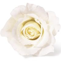 白いバラの花言葉