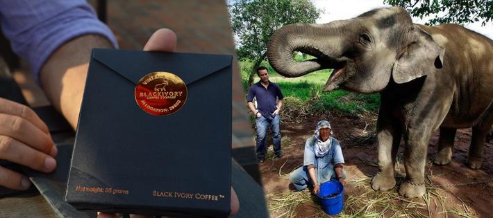 世界一高いコーヒー豆「ブラックアイボリー」
