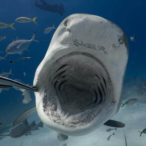 サメによる死亡者