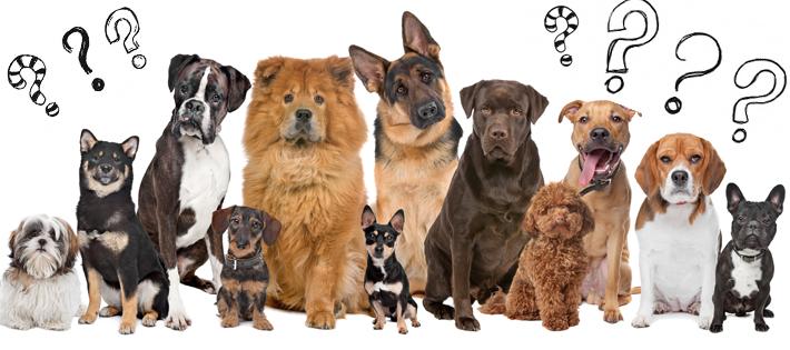 毛の抜けにくい犬種ランキング 家で飼うのに適した10種を徹底紹介