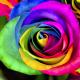 心に響く名言『愛は、あなたが育てるべき花』ジョン・レノン