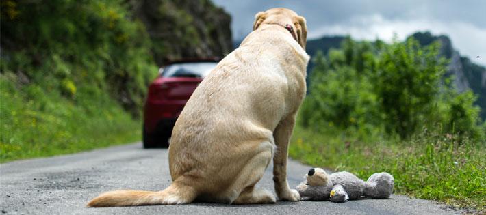 動物殺処分の現状