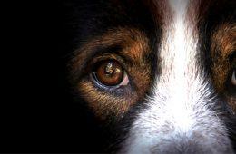 保健所で行われる動物殺処分の悲劇!9分に1匹の命が奪われるペットブームの裏側と闇!!