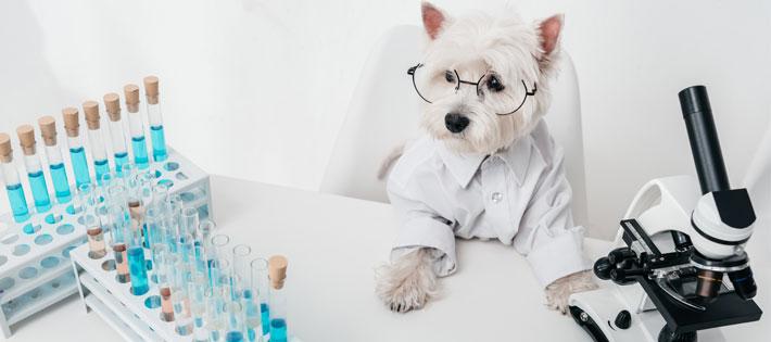 動物実験って何!?