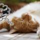 NHKで猫番組が急増!