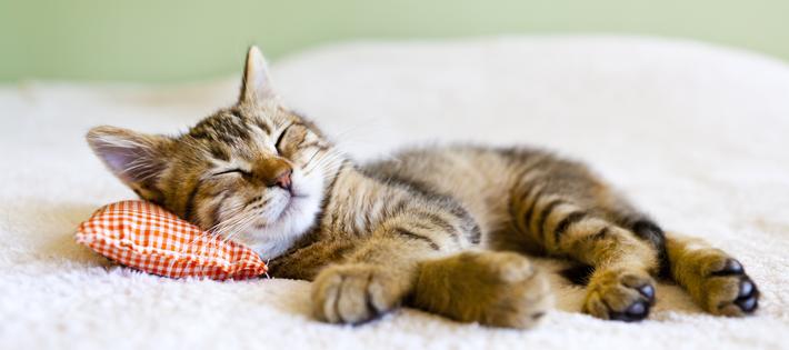 NHK猫番組急増